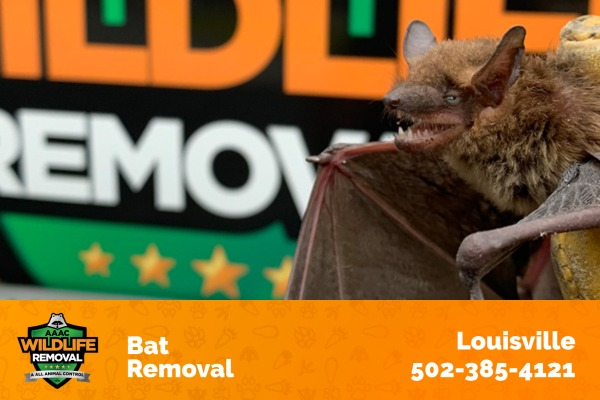 Wildlife Removal Technician Holding a Bat in Front of A Wildlife Removal Truck