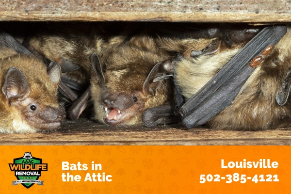 Bats Hiding in an Arric