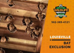 Louisville bat exclusion