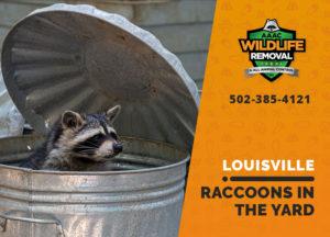 Louisville raccoons in the yard