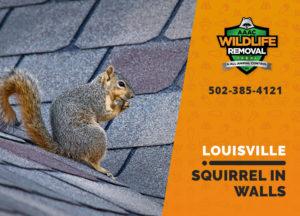 Louisville squirrel in walls