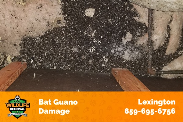 Traces of Bat Guano Damage in a House
