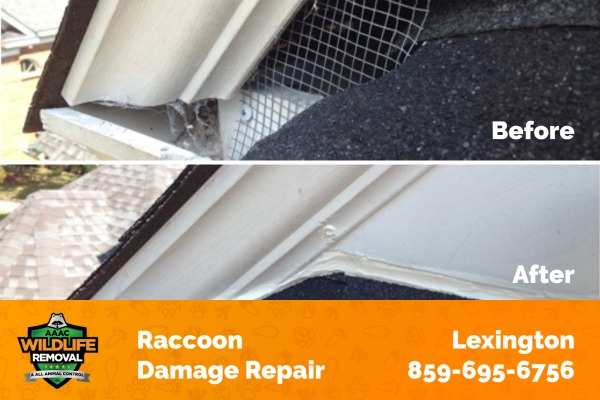 Home Attic Sealing Before and After