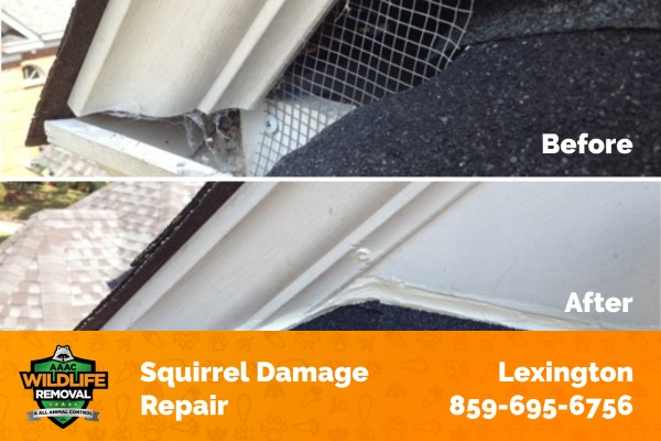 Squirrel Damage Repair Before and After
