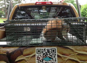 Squirrel inside a cage