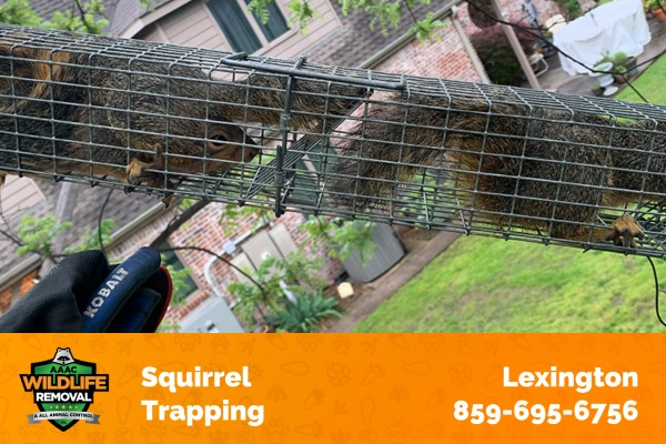 Squirrel Trapping and Control