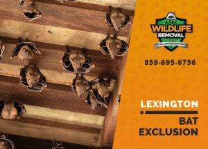 bat exclusion in lexington