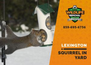 squirrel in my yard lexington
