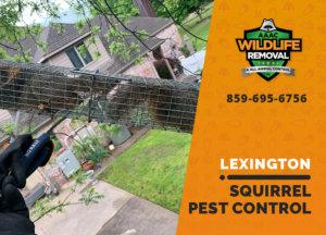 squirrel pest control in lexington