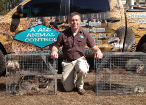 Owner in between of four traps with caught opossums inside