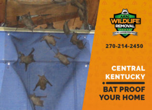 bat proofing my central ky home