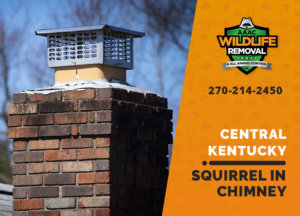 squirrel stuck in chimney central ky
