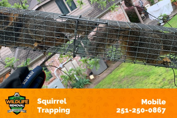 Squirrel Trapping Mobile