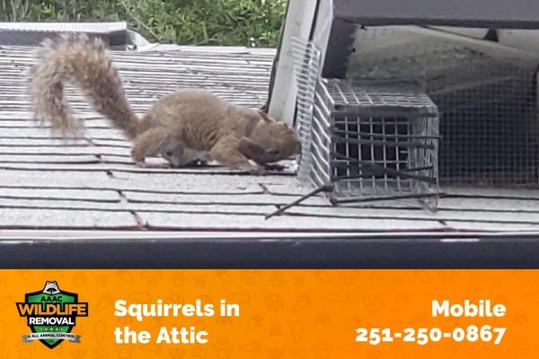 Squirrels in the Attic Mobile
