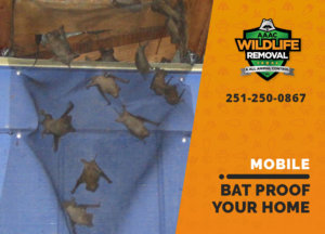 bat proofing my mobile home
