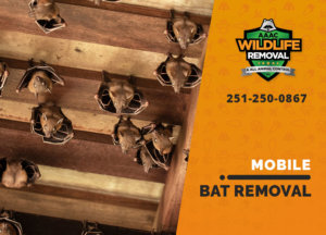 bat exclusion in mobile