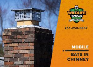 bat in chimney mobile