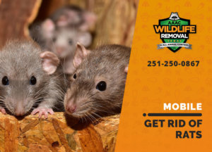 get rid of rats mobile