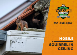 squirrel stuck in ceiling mobile