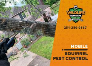 squirrel pest control in mobile