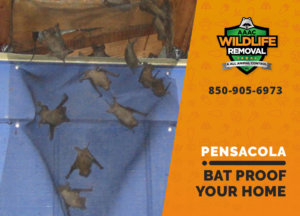 bat proofing my pensacola home