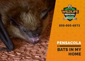 bats in my pensacola home