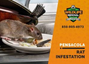 rat infestation signs pensacola