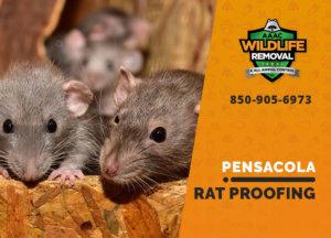 rat proofing in pensacola