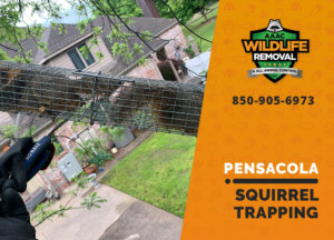 squirrel trapping program pensacola