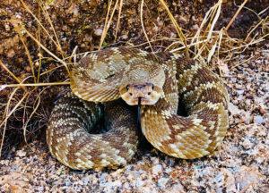 Snake in a field