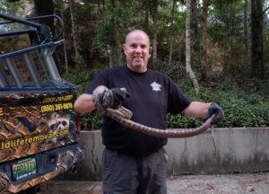 Jim Adams holding a six-and-a-half-foot rat snake.