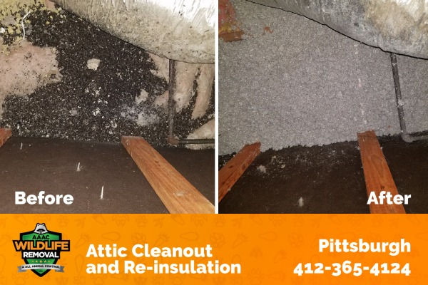Attic Clean-out and Re-insulation Before and After
