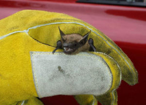 Bat held in loose grip using protective gloves