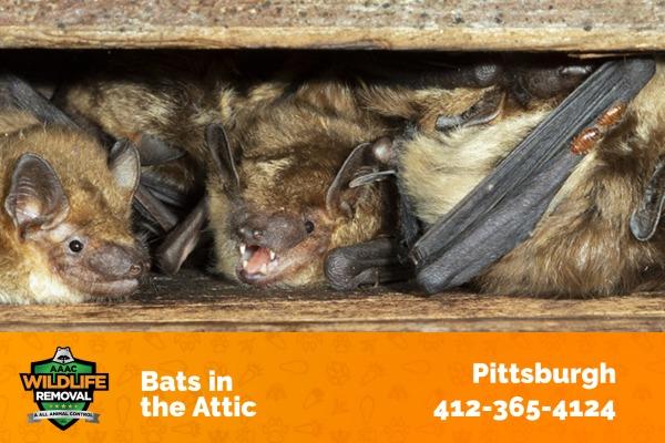 Bars hiding in the Attic