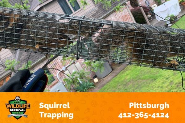 Squirrels Caught in a Trap