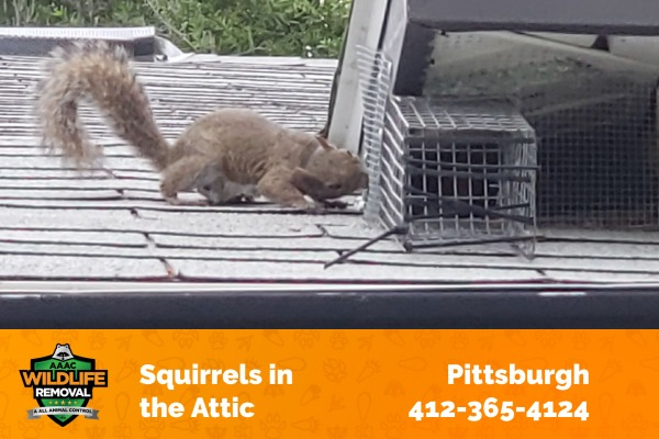 Squirrel Sneaking to an Attiic