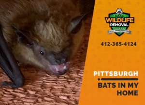 bats in my pittsburgh home