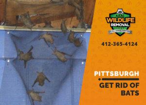 get rid of bats pittsburgh
