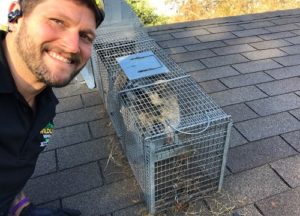 Jeremiah on a Cibolo roof with a trapped Raccoon.