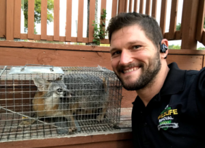 Jeremiah smiling next to a gray fox stuck in a Havahart trap