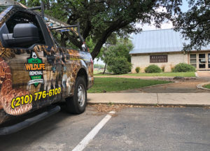 Wildlife Removal truck in front of Helotes city hall