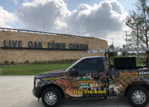 Wildlife removal truck in front of Live Oak Town Center
