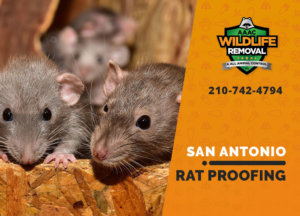 rat proofing in san antonio