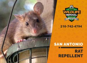 rat repellent useful san antonio