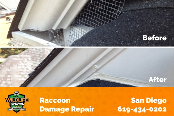 Raccoon Damage Repair Before and After