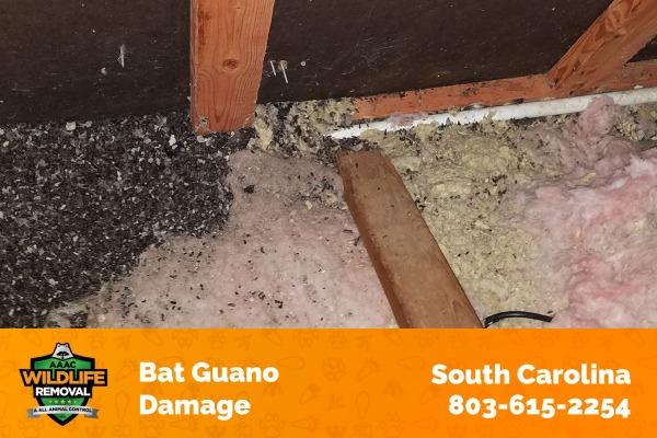 Bat Guano Damage South Carolina