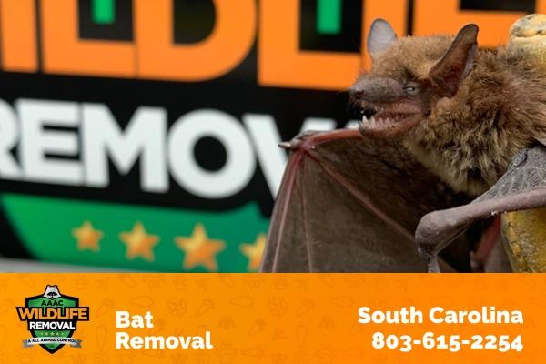 Bat Removal South Carolina