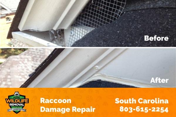 Raccoon Damage Repair South Carolina