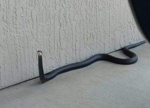 A black racer snake crawling on concrete