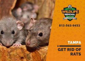 get rid of rats tampa